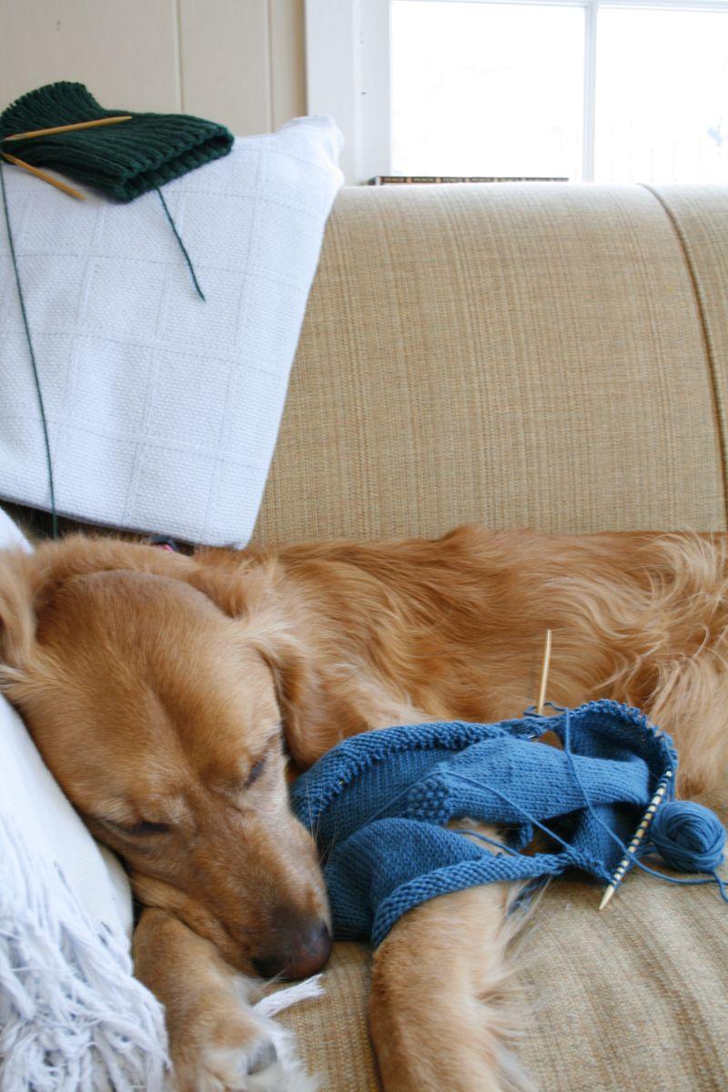 Dog Knit 006